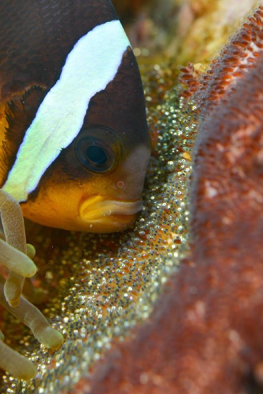 波拉波拉岛酒店内观鱼图片