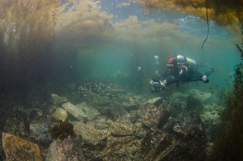 壁纸 海底 海底世界 海洋馆 水族馆 800_530