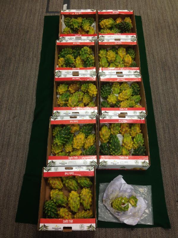 香港海關昨日(七月十九日)在香港國際機場於一批報稱載有火龍果的空運貨物,檢獲約十五公斤懷疑液態可卡因,市值約一千五百七十萬元。