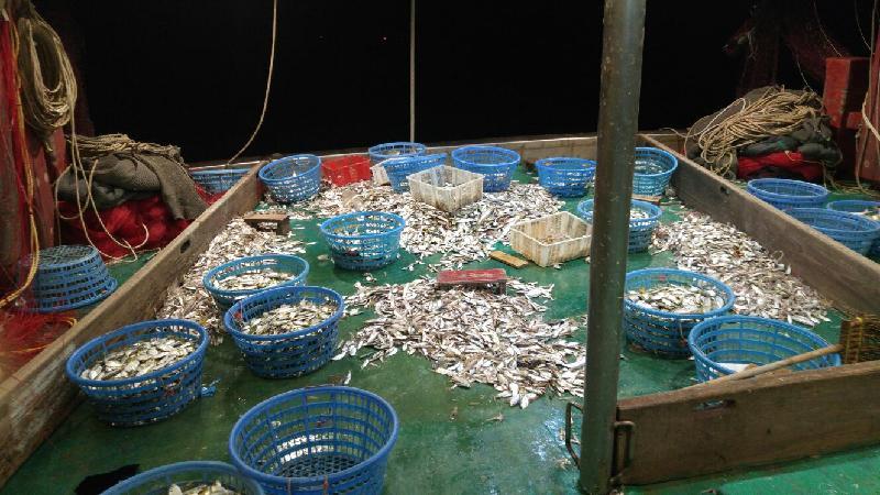 漁農自然護理署(漁護署)與水警昨晚(十一月三十日)進行打擊非法捕魚的聯合行動,在長洲以南截獲一艘涉嫌非法拖網捕魚的摻繒,在船上檢獲300斤漁獲。