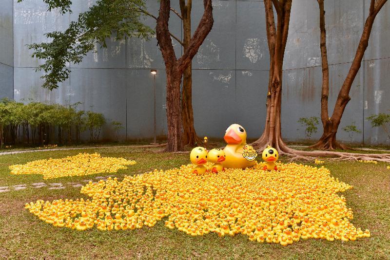 「香港玩具傳奇」展覽今日(三月一日)於香港歷史博物館開幕。圖為展覽中展示由上千隻黃色小鴨組成的大型草地場景。