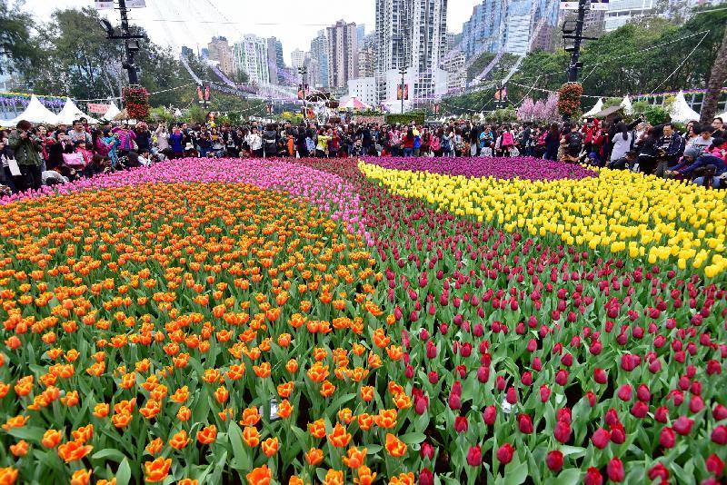 香港花卉展覽於星期日(三月十九日)結束,多個繽紛悅目的園林造景成為遊人的拍照熱點,包括由約一萬四千株色彩絢麗的鬱金香鋪設而成的花海。