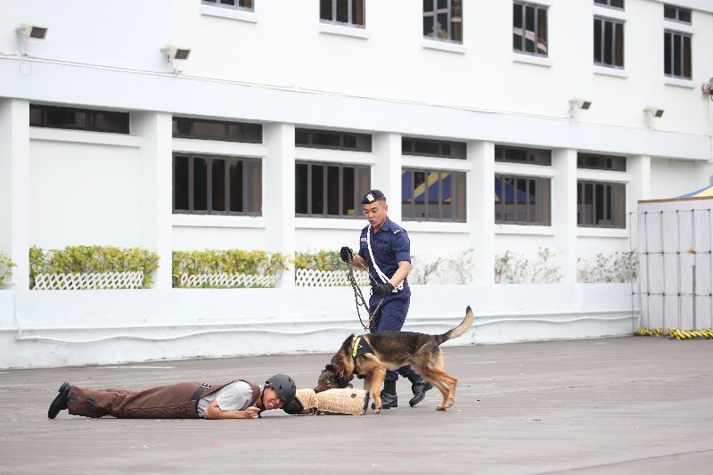 適逢香港特別行政區成立二十周年,懲教署亦同時慶祝「監獄署易名懲教署三十五周年」,今日(三月十八日)在赤柱職員訓練院和香港懲教博物館舉辦「懲教今昔35載」開放日。警衞犬隊表演是其中一個項目。