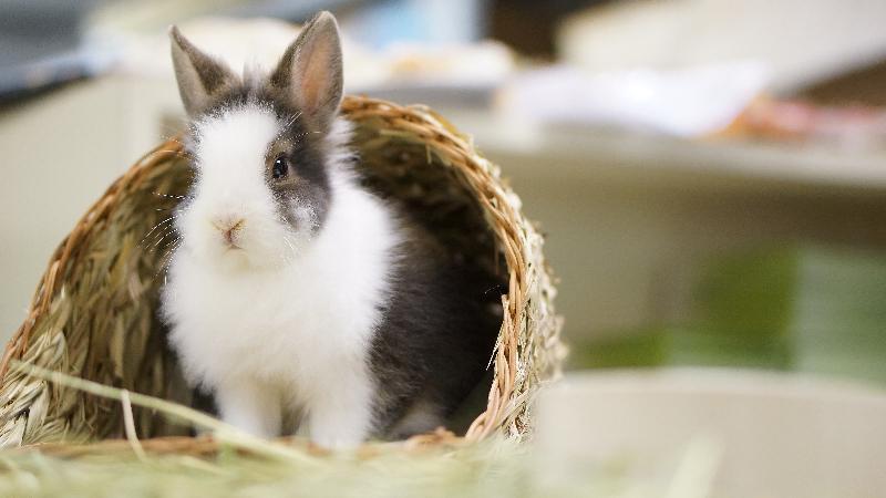 一 連 兩 日 的 「 寵 物 領 養 日 」 本 周 末 ( 三 月 二 十 五 日 和 二 十 六 日 ) 舉 行 。 市 民 可 親 身 接 觸 待 領 養 的 貓 隻 、 兔 子 和 爬 行 動 物 。