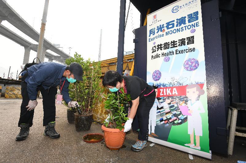 衞生署衞生防護中心聯同多個政府部門和機構今日(五月十二日)在香港葵涌八號貨櫃碼頭西舉行代號「月光石」的演習,測試一旦出現寨卡病毒感染個案時相關政府部門和機構的應變能力。圖示食物環境衞生署人員採取防蚊措施,清理盆栽墊碟積水。