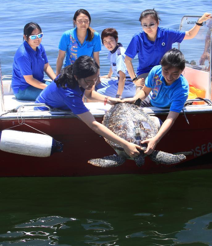 漁 農 自 然 護 理 署 今 日 ( 六 月 二 十 九 日 ) 在 香 港 南 面 水 域 放 流 十 隻 綠 海 龜 及 一 隻 玳 瑁 。 圖 示 一 隻 綠 海 龜 重 回 大 海 生 活 。