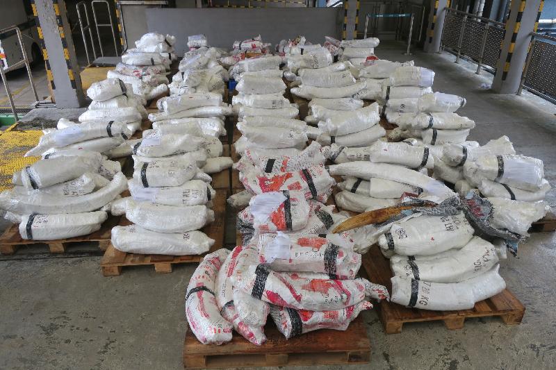香港海关七月四日在葵涌海关大楼验货场一个由马来西亚抵港的货柜内检获约七千二百公斤象牙,估计市值约七千二百万元。