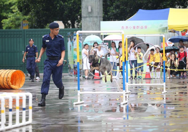 「赤柱監獄八十載」開放日今日(七月八日)舉行,圖示警衞犬隊的表演。