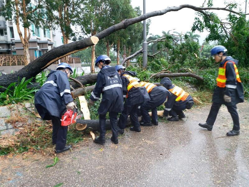 民安隊成員在颱風「帕卡」吹襲後清理塌樹。