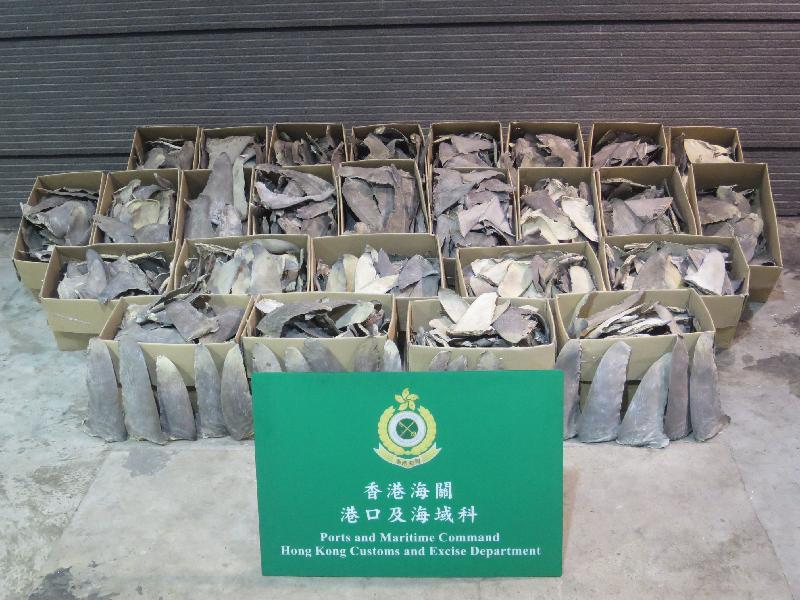 香港海關今日(九月十八日)在青衣海關驗貨場的一個貨櫃內檢獲約三百五十公斤懷疑受管制雙髻鯊及長鰭真鯊乾魚翅,估計市值約二十八萬元。