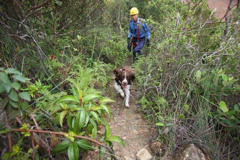 消防處派出搜索犬參與今日(十月十九日)舉行的跨部門山火暨攀山拯救行動演習。