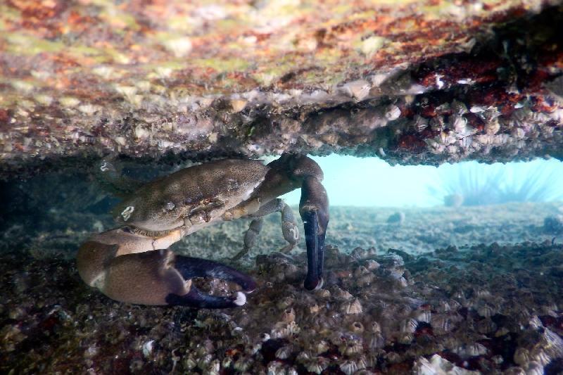 由 漁 農 自 然 護 理 署 ( 漁 護 署 ) 與 香 港 潛 水 總 會 合 辦 的 香 港 潛 攝 大 賽 二 ○ 一 七 圓 滿 結 束 , 今 日 ( 十 月 二 十 一 日 ) 舉 行 頒 獎 禮 。 攝 影 標 準 及 廣 角 照 片 組 的 冠 軍 作 品 「 撐 得 住 」 , 由 何 子 雄 在 海 下 灣 拍 攝 。