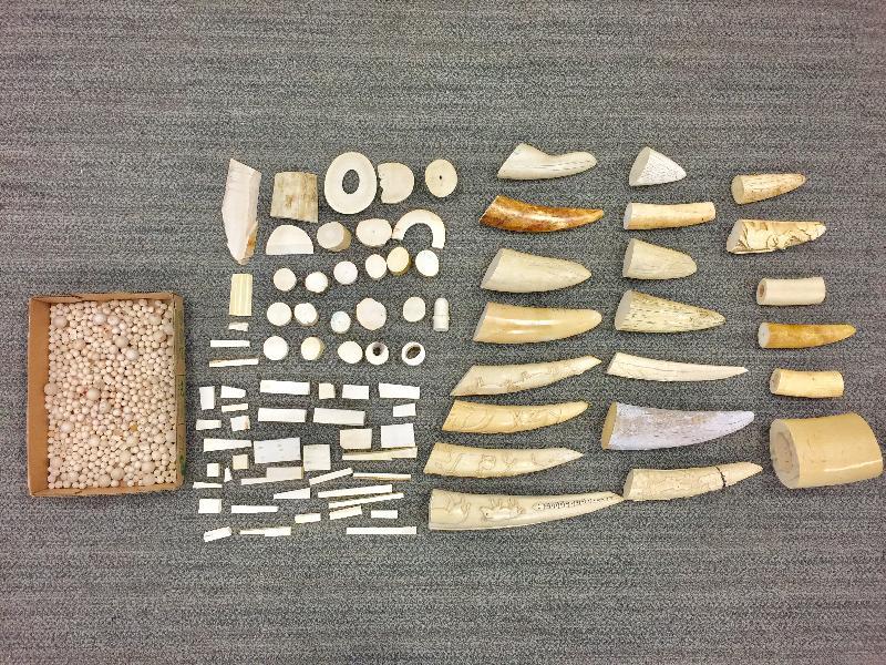香港海關十一月七日在香港國際機場檢獲約十四公斤懷疑象牙製品,估計市值約二十八萬元。