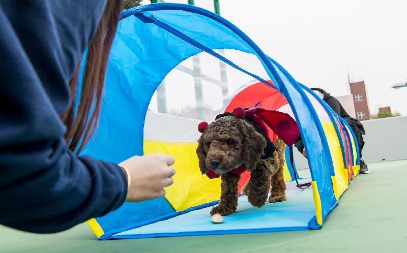 「有你寵愛」狗狗領養嘉年華本周末(一月二十日和二十一日)在荔枝角公園一期足球場舉行。圖示往屆嘉年華的狗隻遊樂場。