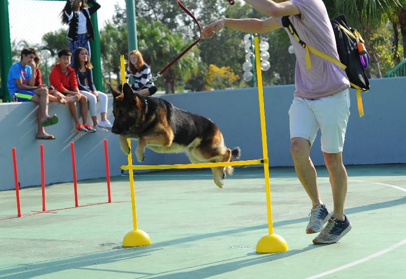 「有你宠爱」狗狗领养嘉年华本周末(一月二十日和二十一日)在荔枝角公园一期足球场举行。图标往届嘉年华的狗只游乐场。