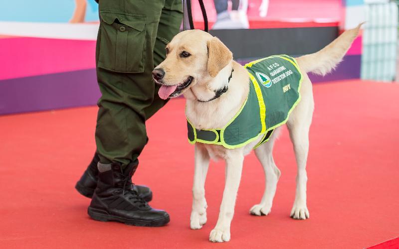 「有你寵愛」狗狗領養嘉年華本周末(一月二十日和二十一日)在荔枝角公園一期足球場舉行。圖示漁農自然護理署檢疫偵緝犬於往屆嘉年華進行示範。