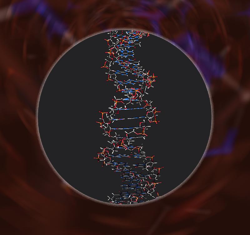 香港太空館明日(二月一日)起上映全新製作的天象節目《宇宙中的生命》,與觀眾探索地外生命的可能性。圖示生物的遺傳物質脫氧核糖核酸(DNA)。假如將一顆人類細胞內的所有DNA拉直並頭尾相接,總長度約有兩米。