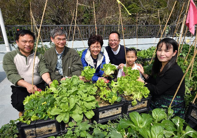"The Chief Executive, Mrs Carrie Lam, attended a New Year Feast this afternoon (February 25) with dozens of residents of the Light Housing project in Sham Tseng to extend her Chinese New Year greetings to them. Picture shows Mrs Lam (third left) harvesting lettuces grown by the residents on the rooftop farm for the ""lo hei"" ceremony."