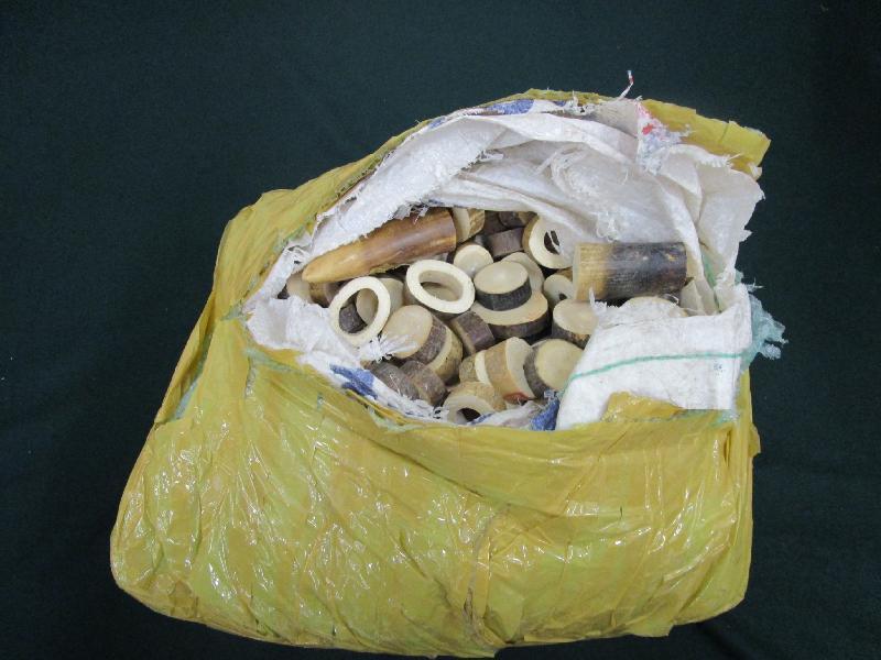 香港海關與漁農自然護理署於六月十八日至八月二十五日期間,進行代號「守衞者」的聯合執法行動,在機場、港口、陸路及鐵路管制站加強打擊走私瀕危物種的活動。圖示部分檢獲的懷疑象牙製品。