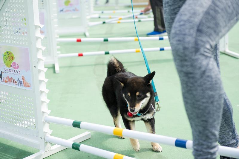 「有你寵愛」狗狗領養嘉年華本周末(十二月二十二日和二十三日)在荔枝角公園一期足球場舉行。圖示上屆嘉年華的狗狗遊樂場。