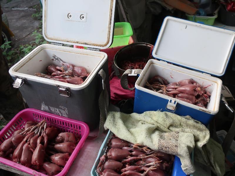食物環境衞生署今日(一月二十五日)上午聯同漁農自然護理署採取突擊行動,在元朗田心村搗破一無牌食物製造工場。圖示行動中檢獲的已屠宰鵪鶉。