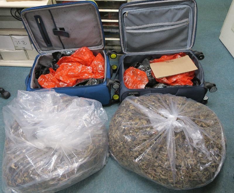 一  名  旅  客  因  走  私  乾  海  馬  ,  違  反  《  保  護  瀕  危  動  植  物  物  種  條  例  》  罪  名  成  立  ,  今  日  (  三  月  二  十  七  日  )  被  判  處  監  禁  。  圖  示  海  關  人  員  在  其  行  李  發  現  的  乾  海  馬  。