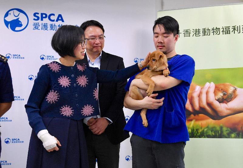 食物及衞生局局長陳肇始教授今日(四月二十六日)到訪愛護動物協會(愛協)總部,了解愛協在推廣動物福利的工作。圖示愛協職員為陳肇始教授(左)介紹待領養狗隻。
