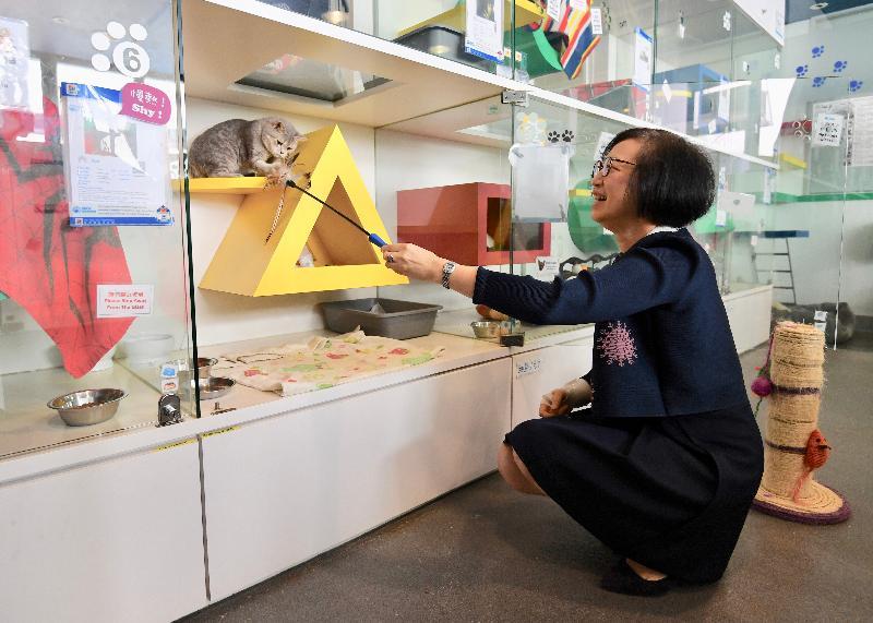 食物及衞生局局長陳肇始教授今日(四月二十六日)到訪愛護動物協會(愛協)總部,了解愛協在推廣動物福利的工作,並參觀愛協領養貓舍。