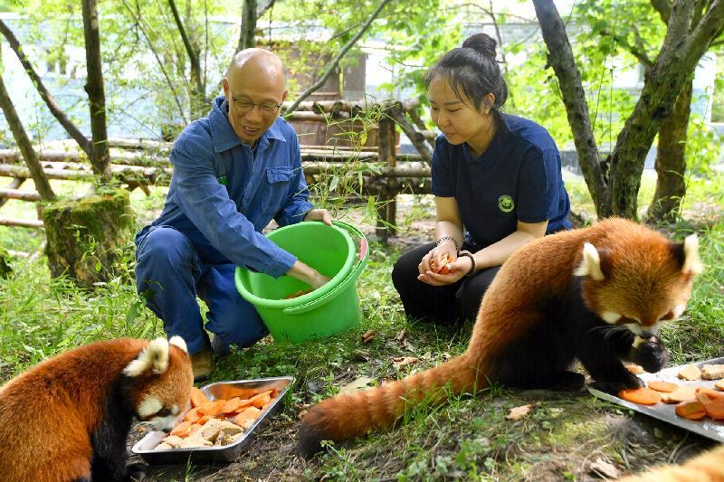環境局局長黃錦星今日(八月十四日)到訪四川。圖示黃錦星(左)在中國保護大熊貓研究中心位於臥龍的核桃坪基地餵飼小熊貓。