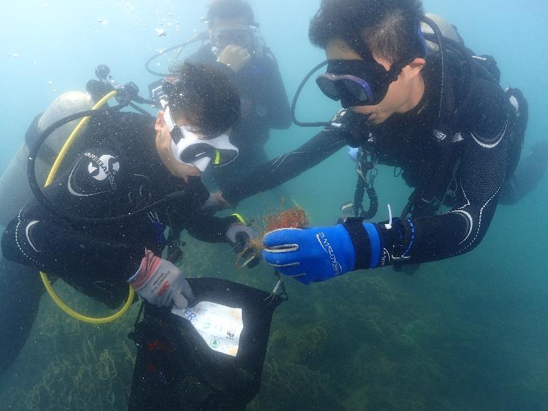 漁   農   自   然   護   理   署   與   香   港   潛   水   總   會   今   日   (   九   月   二   十   一   日   )   於   西   貢   橋   咀   洲   第   六   年   舉   辦   海   岸   清   潔   日   。   圖   示   義   務   潛   水   員   撿   拾   海   床   的   垃   圾   。