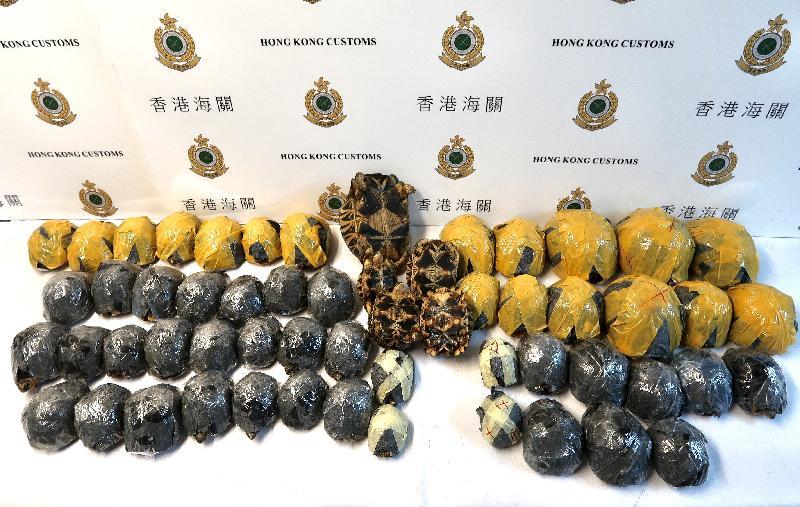 香港海關昨日(九月二十八日)在香港國際機場檢獲五十七隻懷疑瀕危物種活龜,估計市值約港幣三十四萬元,案件亦懷疑涉及殘酷對待動物的行為。