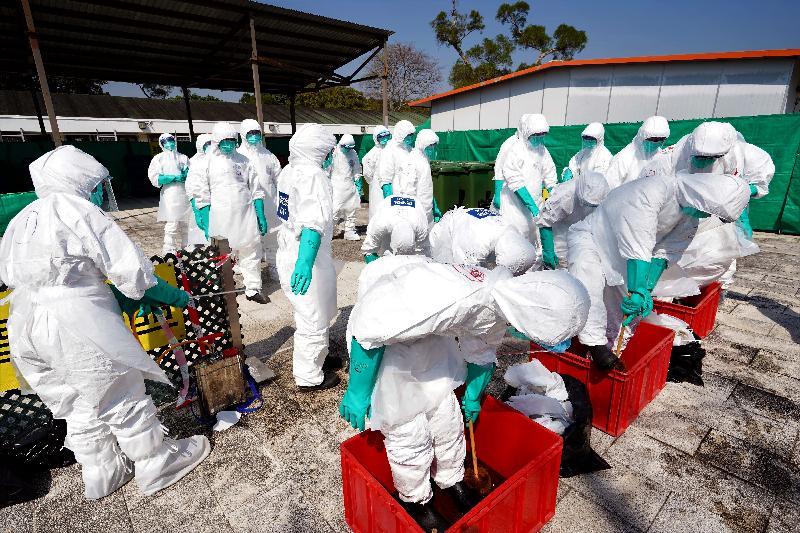 漁 農 自 然 護 理 署 今 日 ( 十 一 月 五 日 ) 舉 行 演 習 , 以 檢 視 一 旦 在 香 港 發 生 高 致 病 性 禽 流 感 需 要 銷 毀 家 禽 時 , 該 署 及 其 他 部 門 的 應 變 能 力 。 圖 示 參 與 禽 流 感 應 變 演 習 的 人 員 完 成 銷 毀 家 禽 行 動 後 進 行 徹 底 消 毒 。