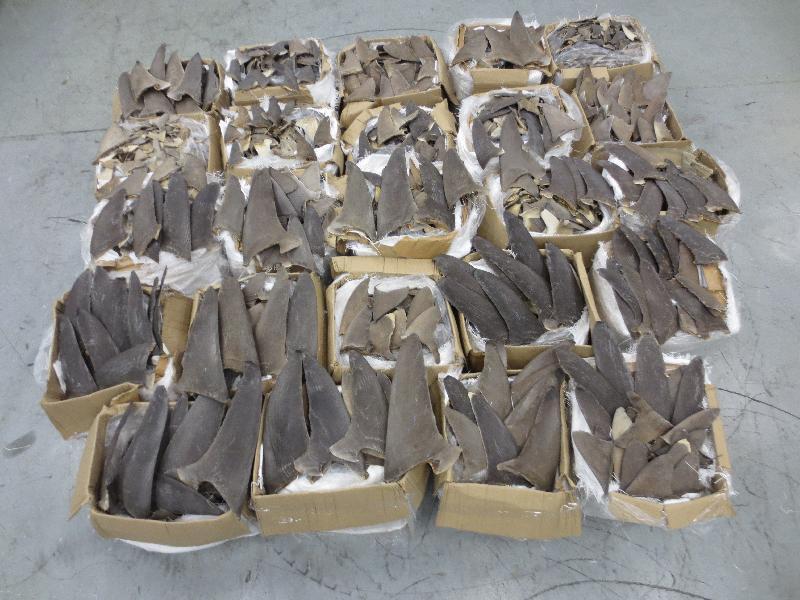 香港海關檢獲逾一公噸懷疑受管制乾魚翅