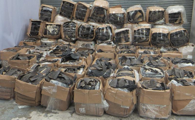 香港海關檢獲逾三公噸懷疑受管制乾魚翅