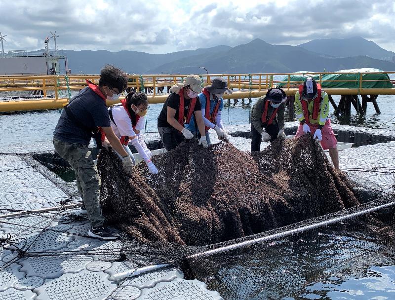 為引領香港海產養殖業邁向現代化及可持續發展,漁農自然護理署今年在東龍洲魚類養殖區設立現代化海產養殖示範場。圖示推廣海產養殖現代化及可持續發展計劃的學員在示範場進行實習訓練。