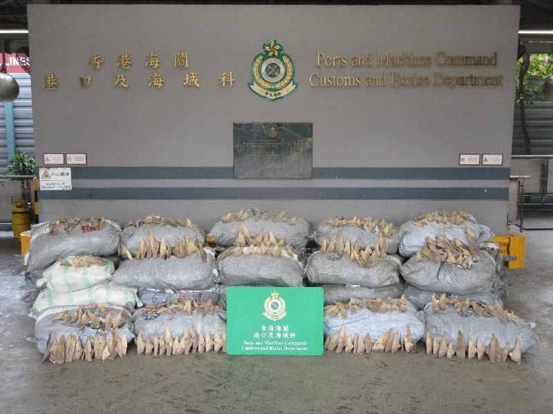 香港海關檢獲逾五公噸懷疑走私乾魚翅及藍吻犁頭鰩屬乾魚翅